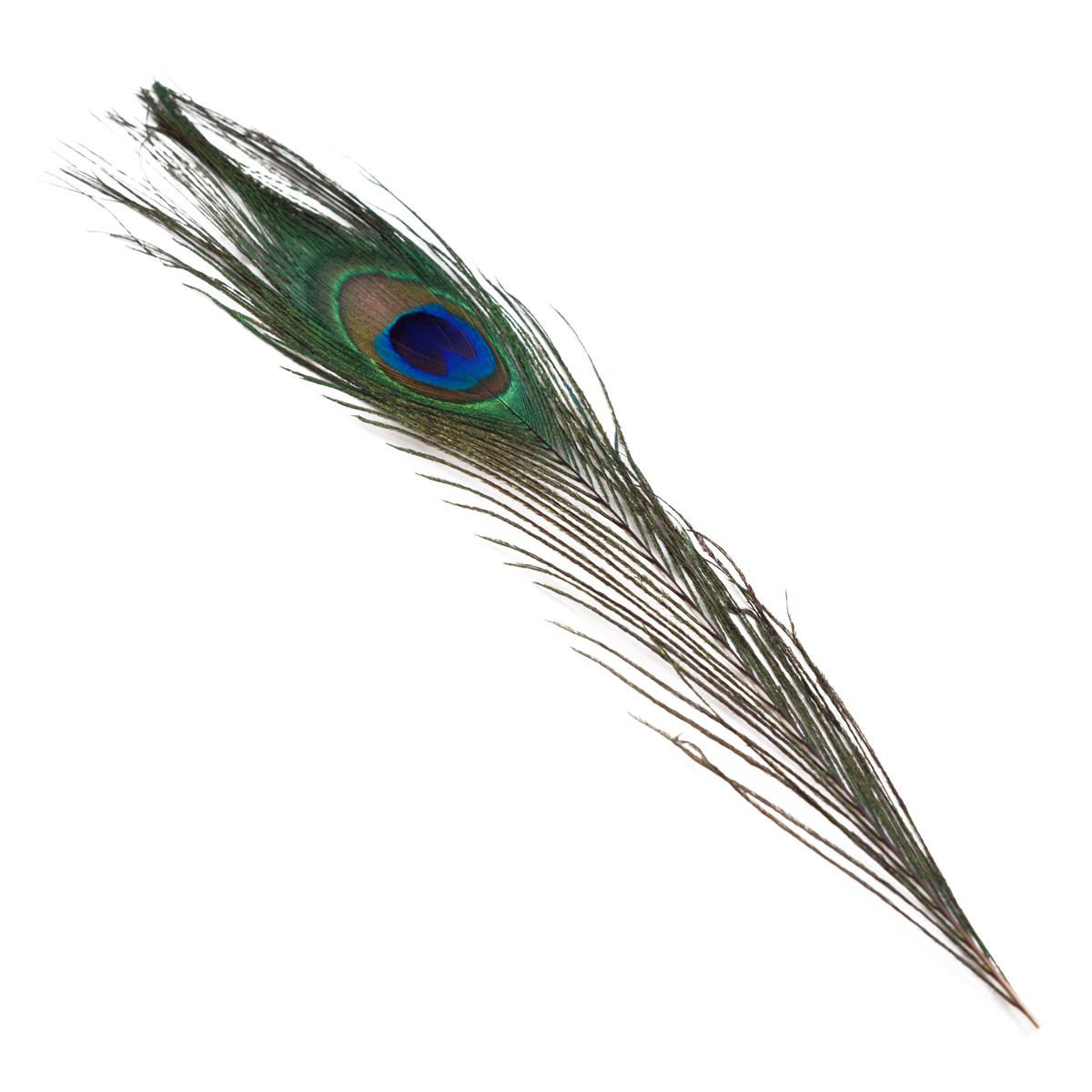 Image of   Påfugle fjer
